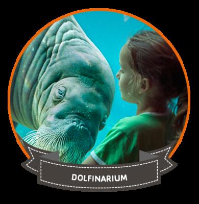 Ga naar het Dolfinarium